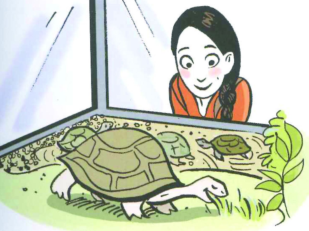 48_tortue